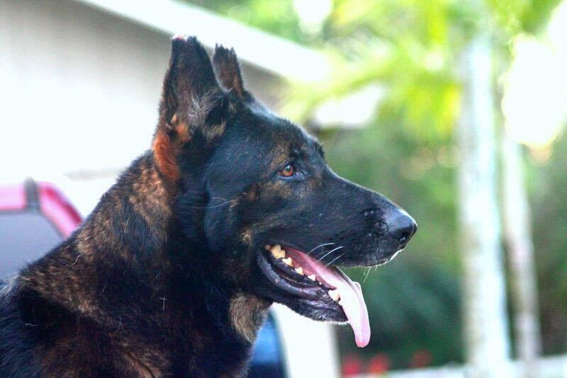 Loxahatchee Animal Rescue Community - LARC