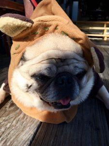 Pug Ewok
