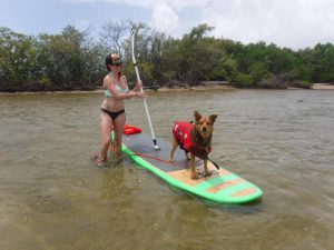 Dog on SUP board