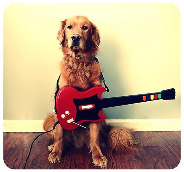Rock n' Bark Benefit Concert