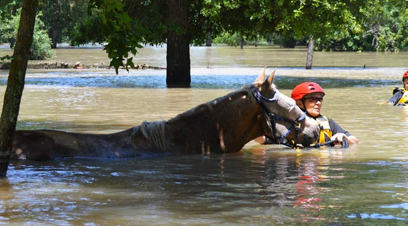 Hurricane Harvey Horse Rescue
