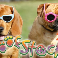 Woofstock Broward