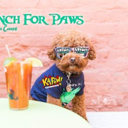 Bark n Brunch