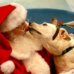 Santa Clause Dog