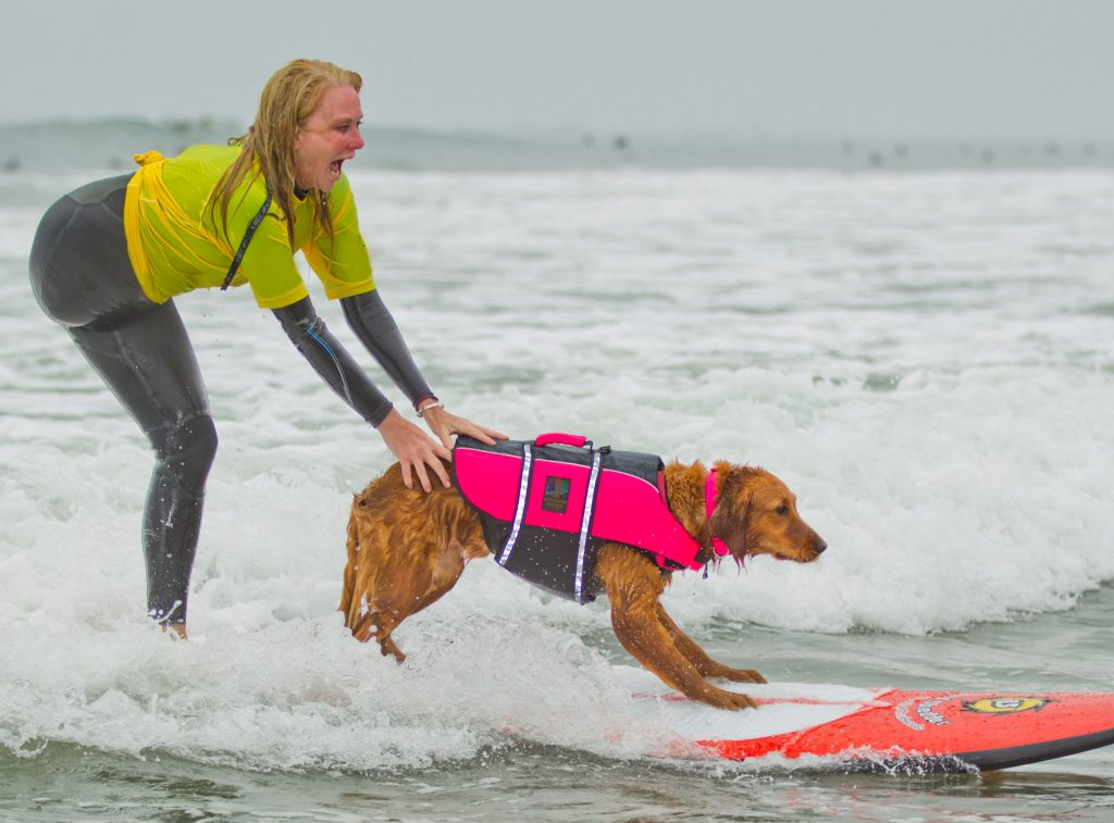 Surfing service dog