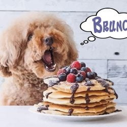 Doggy Brunch