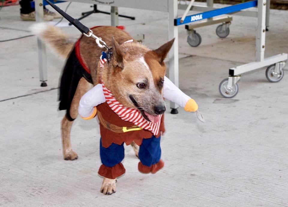 Halloween Doggie Brunch