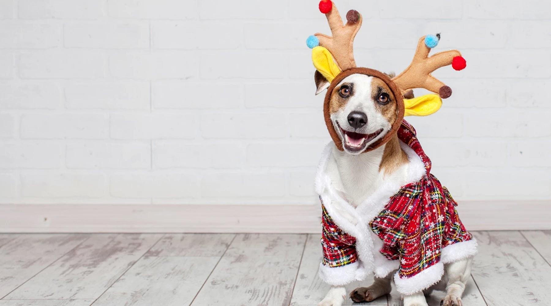 Holiday Doggie Brunch