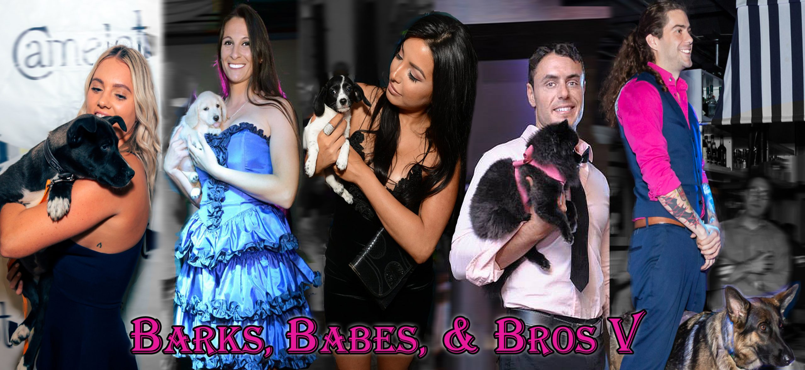 Barks Babes Bros