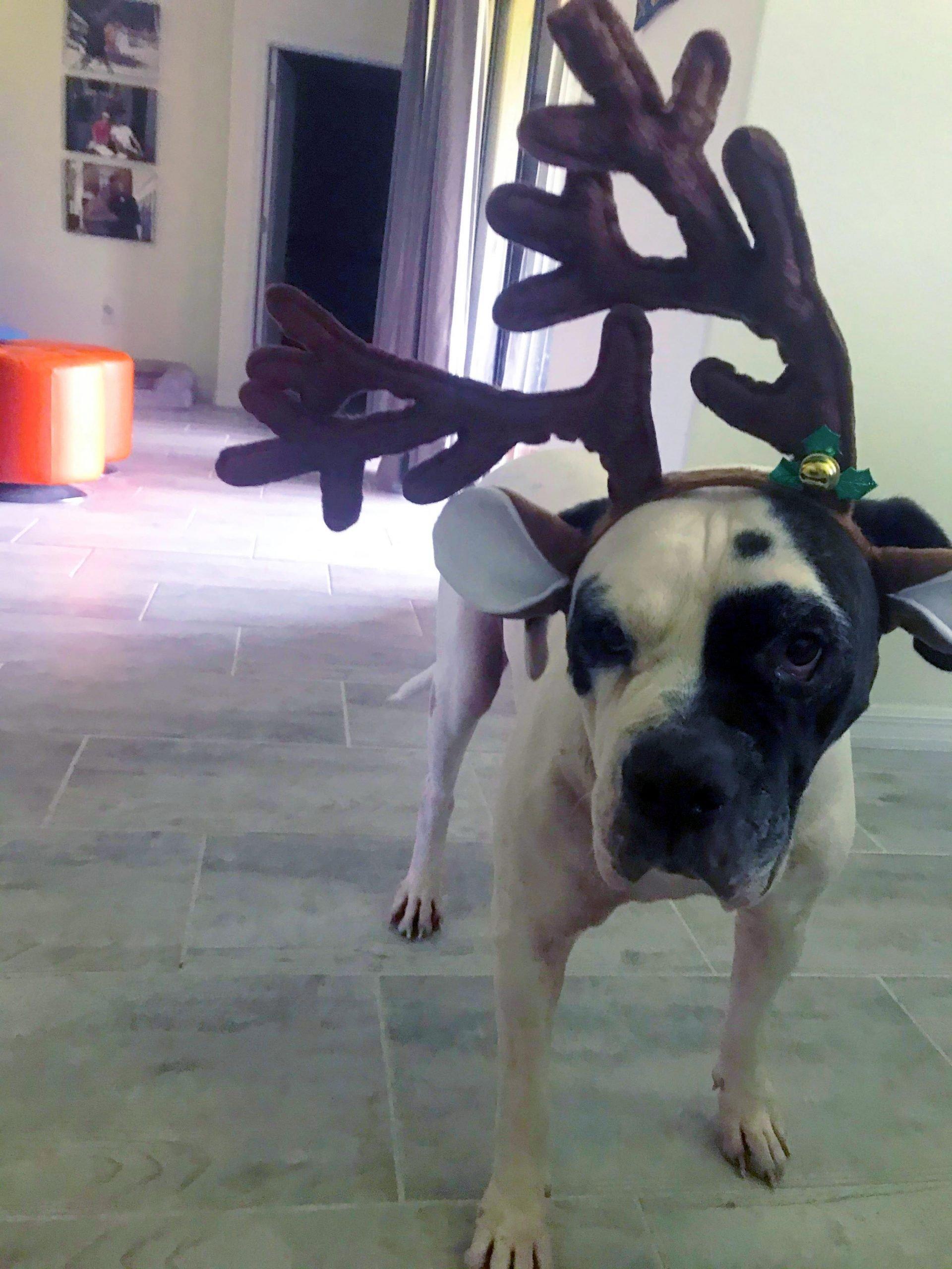 Karma Christmas Photo
