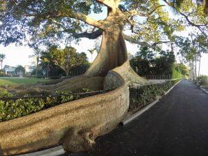 Palm Beach Island Intracoastal – Calm