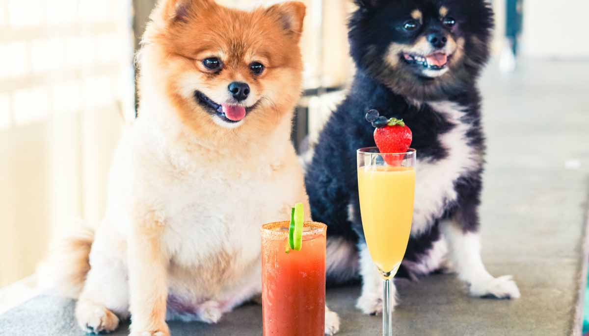 Barky Brunch
