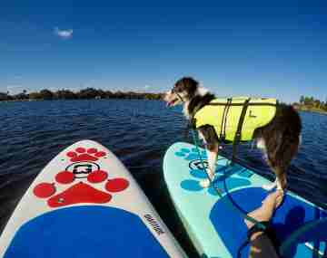 Paddling with High Anxiety Dogs